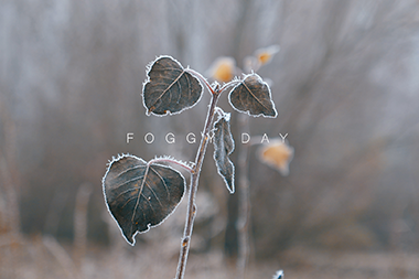 FOGGY DAY | PEZ VOLADOR